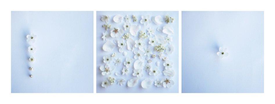 kwiat tło ślub kwiaty świeże zaproszenie biały niebieski wiosna