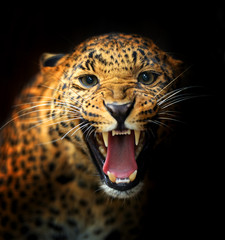 Photo sur Plexiglas Leopard Leopard