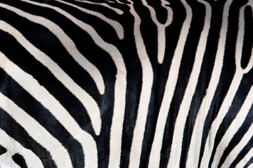 Wall Mural - Zebra patterns