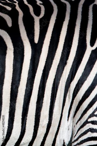 Wall mural Zebra pattern