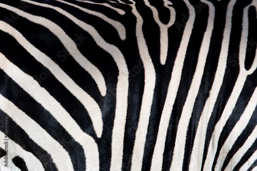 Wall mural Zebra patterns