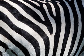 Wall Mural - Zebra pattern