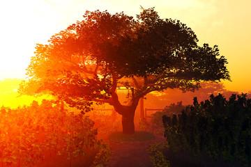 Garden of Herbs and Summer Cherry Tree Sunset Sunrise 3D render