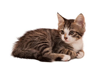 gray striped kitten with a sad grimace