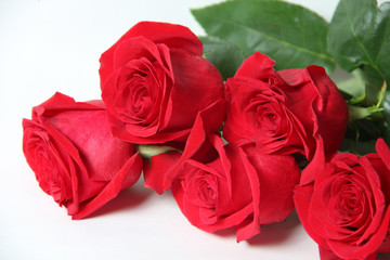 The red rose is a white background