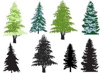 eight firs isolated on white