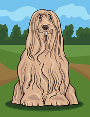 bearded collie dog cartoon illustration