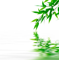 The bamboo branches touching the water