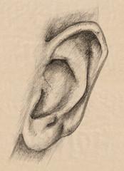 human ear pencil drawing