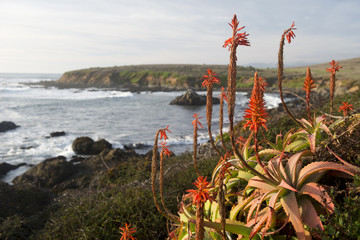 Cambria coast, California