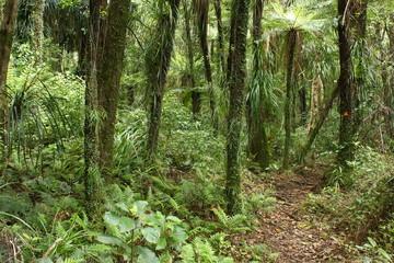 footpath across rain forest in Coromandel