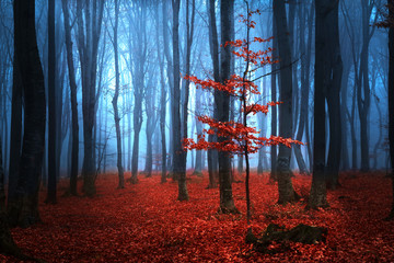 Photo sur Aluminium Rouge mauve Autumnal foggy forest