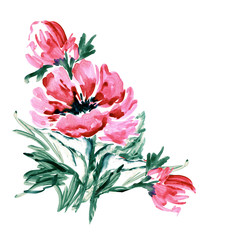 Watercolor red peony