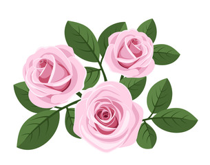 Three pink roses with leaves on white. Vector illustration.