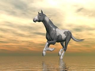 Gypsy vanner horse running - 3D render