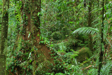 rainforest in North Queensland