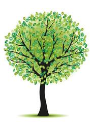 beauty green tree