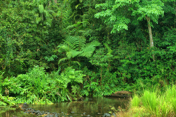 Henrietta Creek, near Innisfail, North Queensland