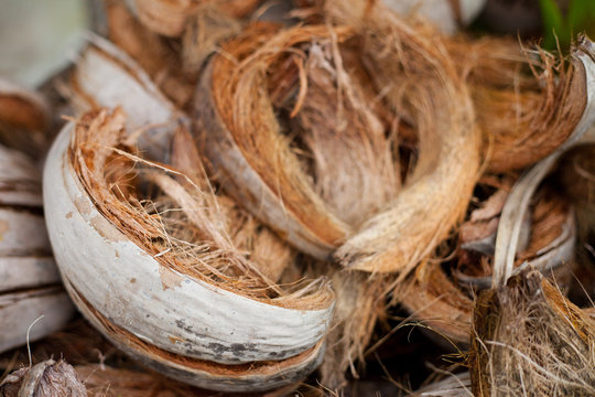Tropical Coconut dry Shell and fiber peel for coconut milk. close up Island summer plant brown color.