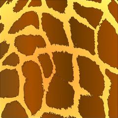 Giraffe ~ Giraffa camelopardalis ~ Fell ~ Muster ~ Haut