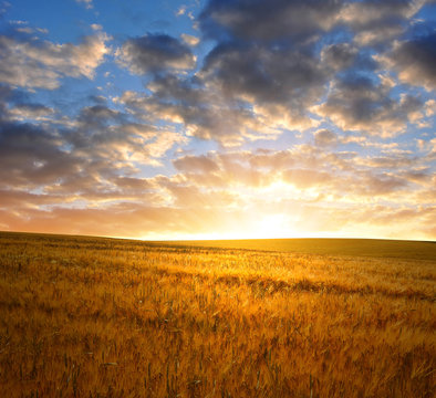 sunset over wheat fields