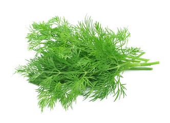 Fennel herbs