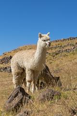 Peru-2244