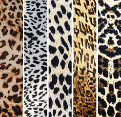 Collage of leopard textures