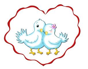 piccioni innamorati