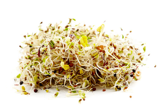 Various germ sprouts