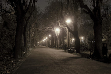 Fototapeta Park alley by night