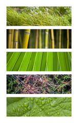 Wall Mural - Jardin, nature, végétation, printemps, vert, plante, végétal