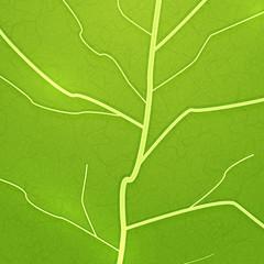 Vector fresh green leaf texture