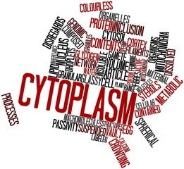 Word cloud for Cytoplasm