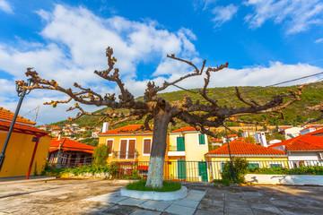 Strange Platani Tree view
