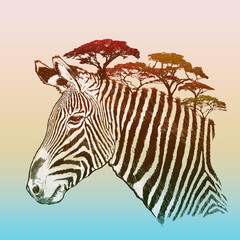 Evening savanna zebra
