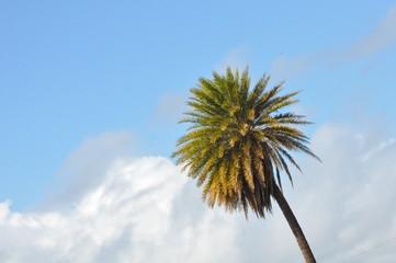 Palm Tree in Hawaii