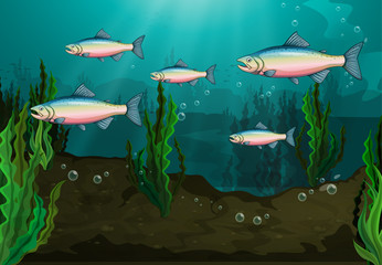 Poster Submarine A school of fish