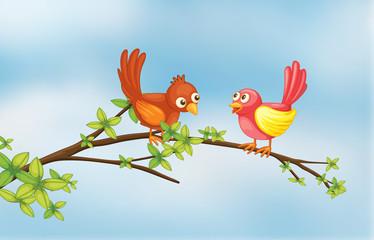 A couple bird