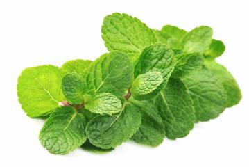 Fresh mint close up