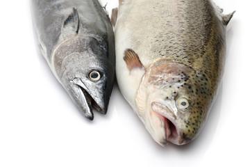 Fresh Bonito and Salmon