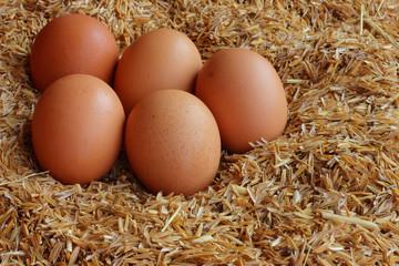 Eggs laid on the husk