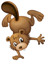 A playful beaver