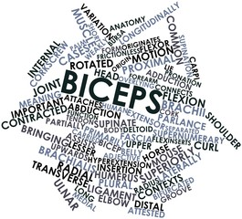 Word cloud for Biceps