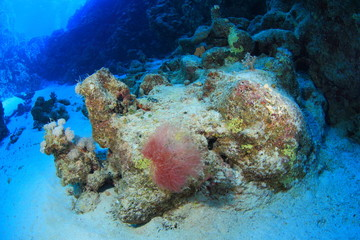Life under water in the Red Sea
