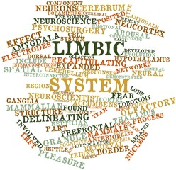 Word cloud for Limbic system