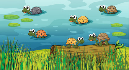 Foto op Canvas Onderzeeer A group of turtles in the river