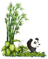A panda hiding