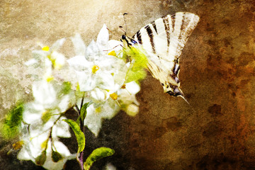 Fiore quadro