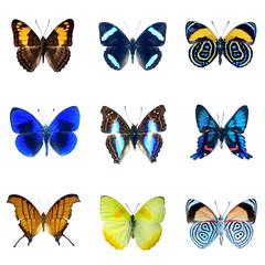 Collection de papillons sur fond blanc en haute definition